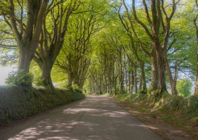 Knole Farm lane